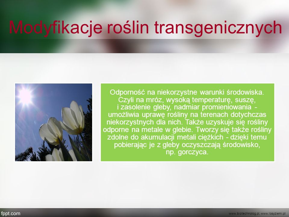 Modyfikacje roślin transgenicznych