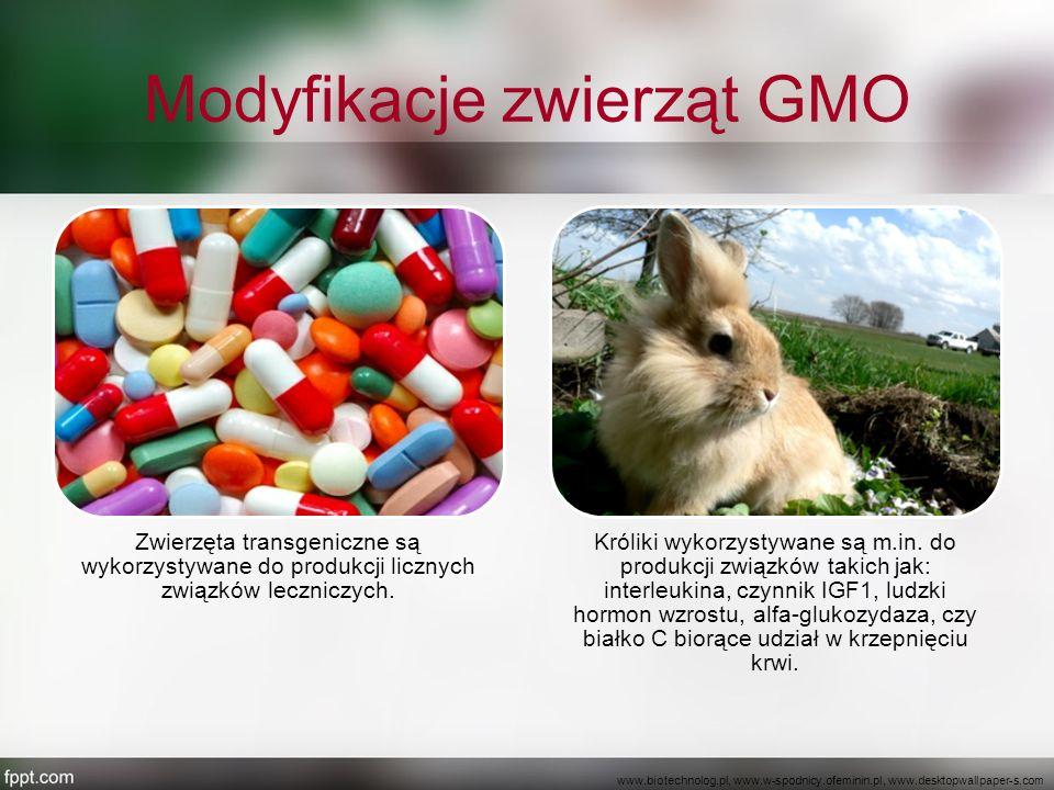 Modyfikacje zwierząt GMO