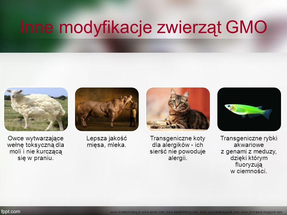 Inne modyfikacje zwierząt GMO