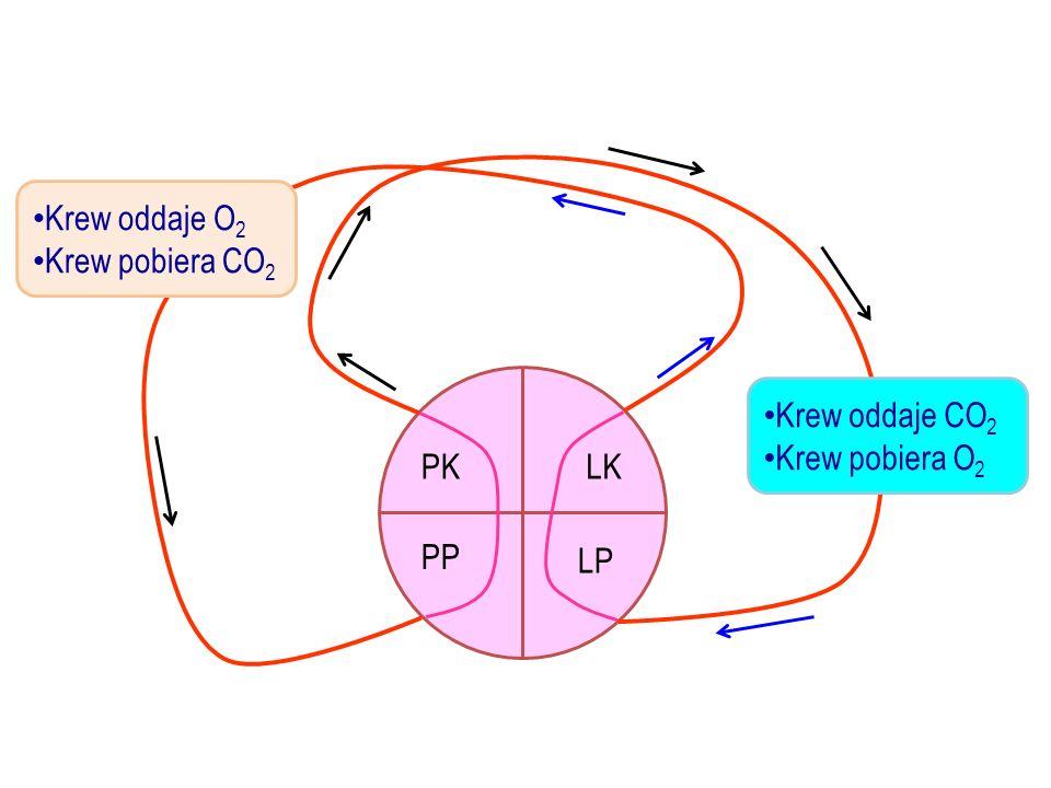 Krew oddaje O2 Krew pobiera CO2 Krew oddaje CO2 Krew pobiera O2 PK LK PP LP