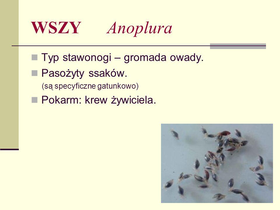 WSZY Anoplura Typ stawonogi – gromada owady. Pasożyty ssaków.