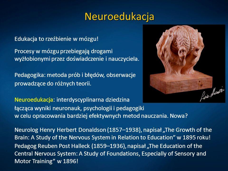 Neuroedukacja Edukacja to rzeźbienie w mózgu!