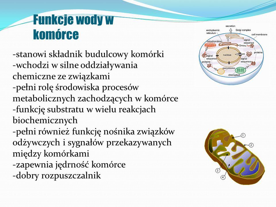 Funkcje wody w komórce