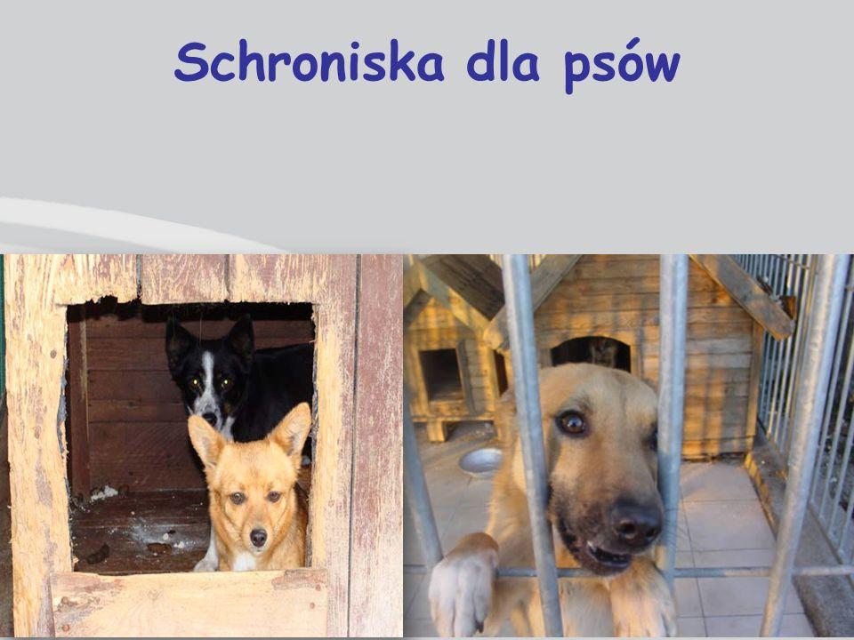 Schroniska dla psów
