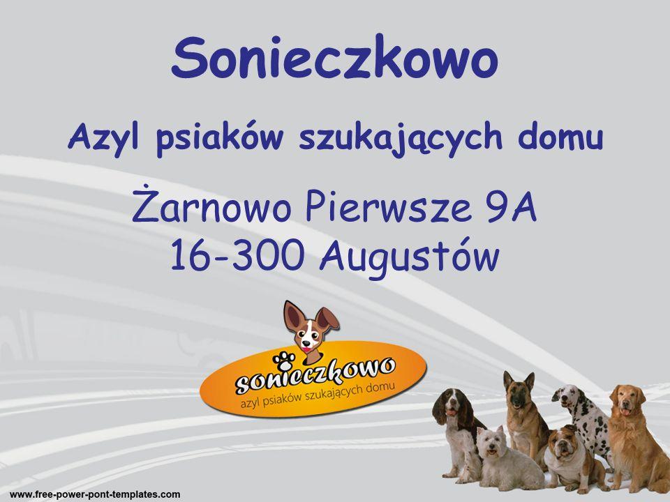 Sonieczkowo Azyl psiaków szukających domu