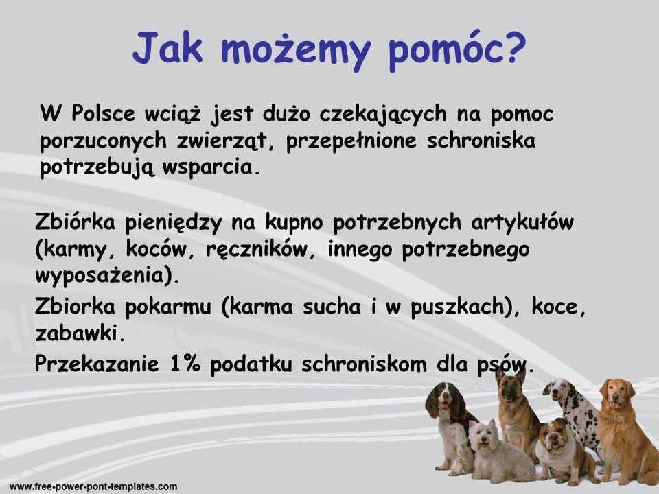 Jak możemy pomóc W Polsce wciąż jest dużo czekających na pomoc porzuconych zwierząt, przepełnione schroniska potrzebują wsparcia.