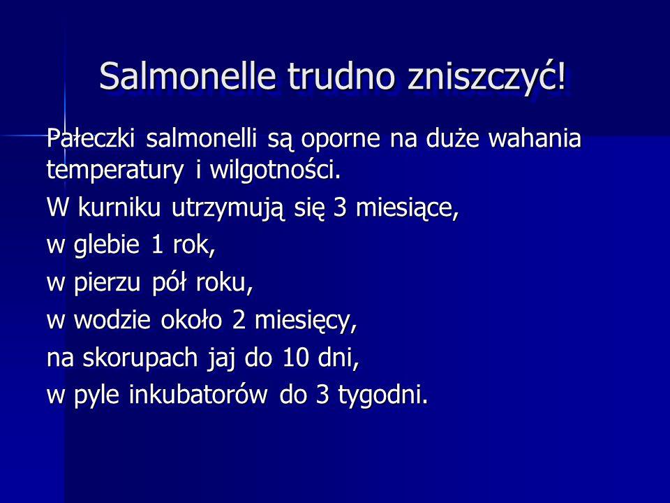 Salmonelle trudno zniszczyć!