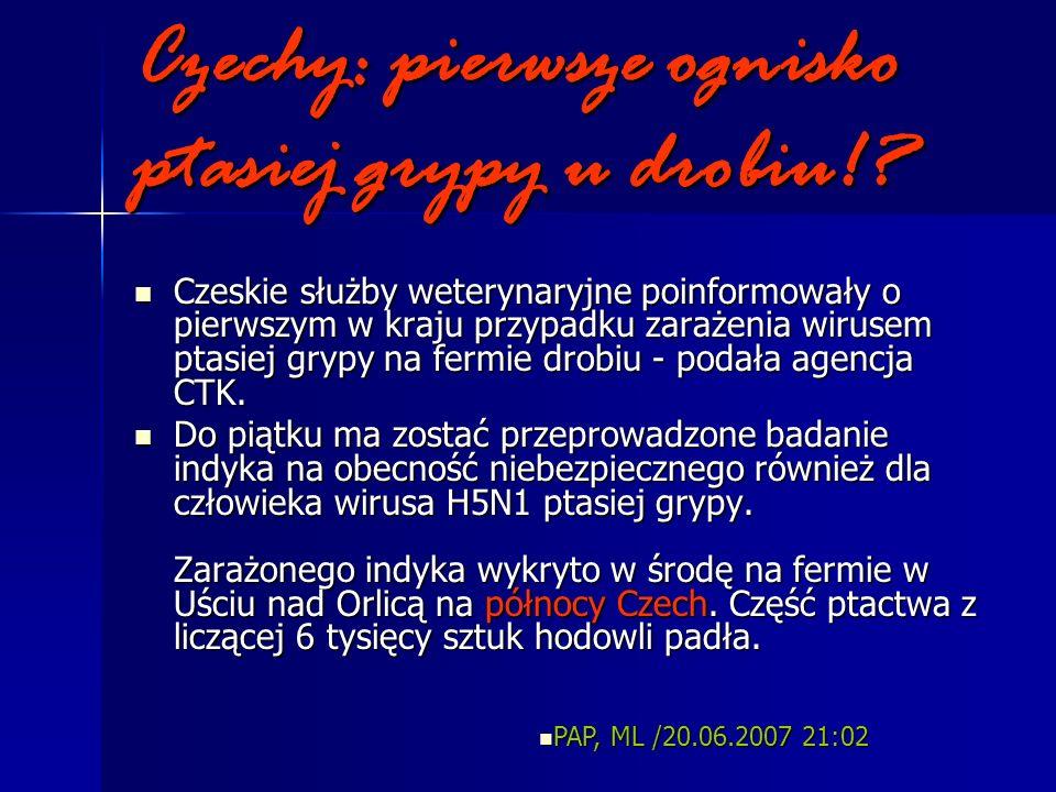 Czechy: pierwsze ognisko ptasiej grypy u drobiu!