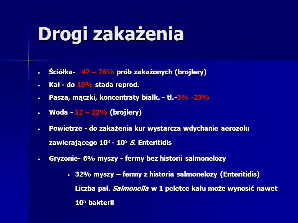 Drogi zakażenia Ściółka- 47 – 76% prób zakażonych (brojlery)
