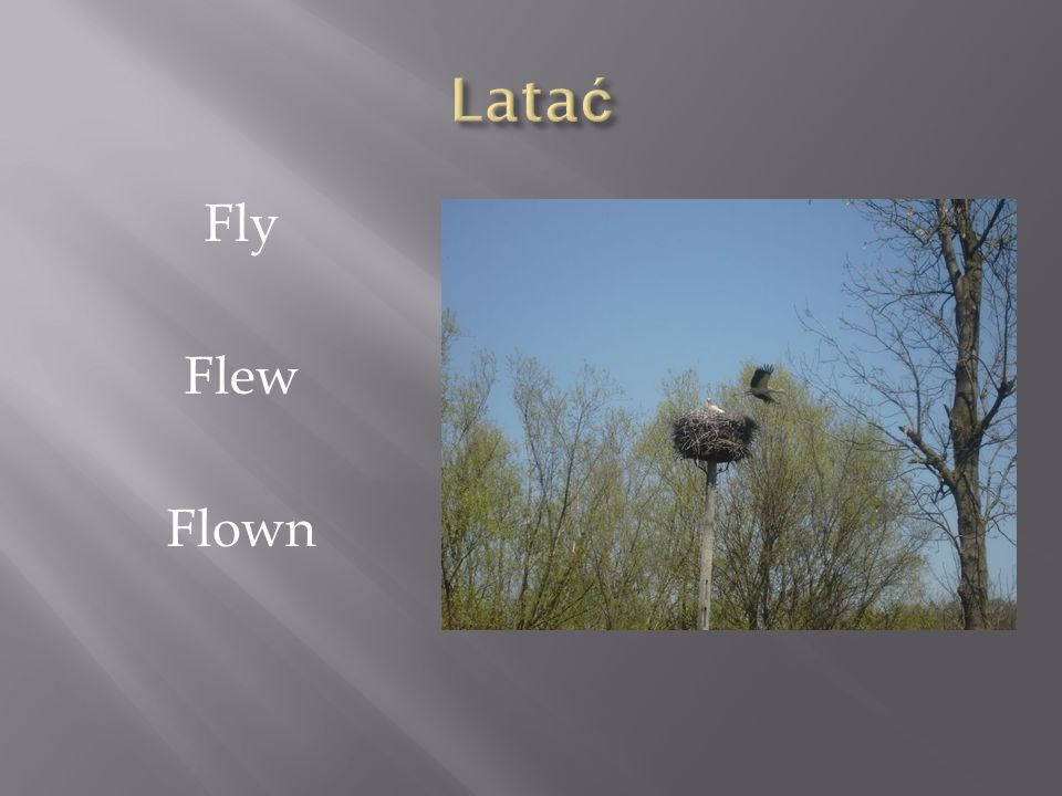 Latać Fly Flew Flown