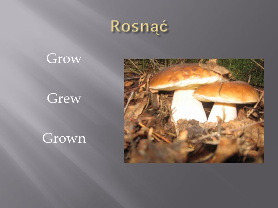 Rosnąć Grow Grew Grown
