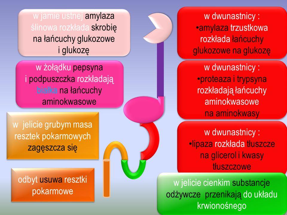 amylaza trzustkowa rozkłada łańcuchy glukozowe na glukozę