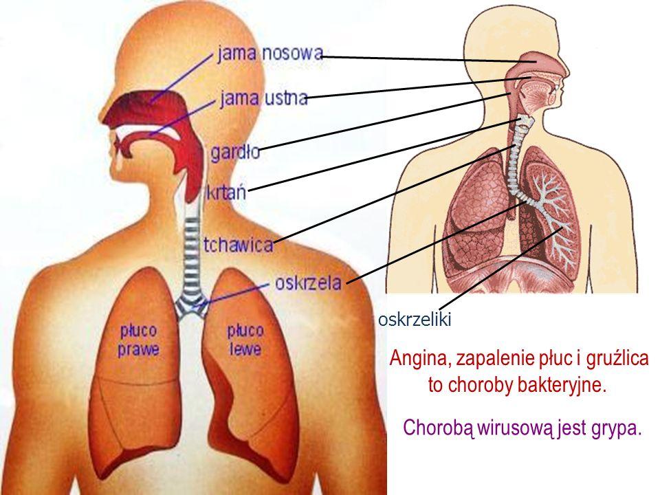 Angina, zapalenie płuc i gruźlica to choroby bakteryjne.