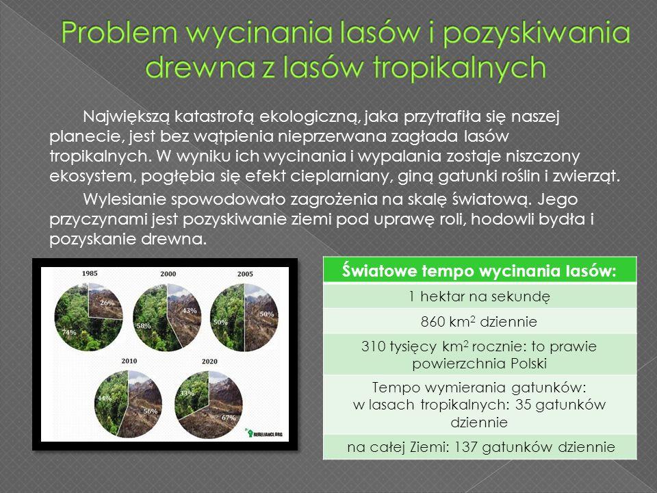 Problem wycinania lasów i pozyskiwania drewna z lasów tropikalnych