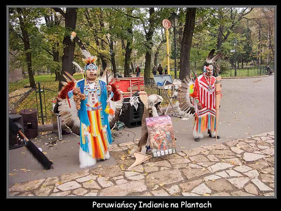 Peruwiańscy Indianie na Plantach