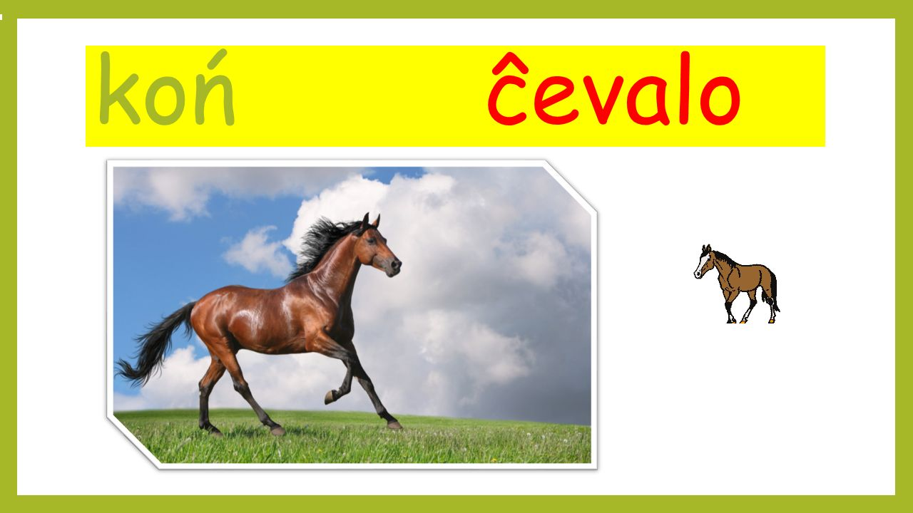 koń ĉevalo