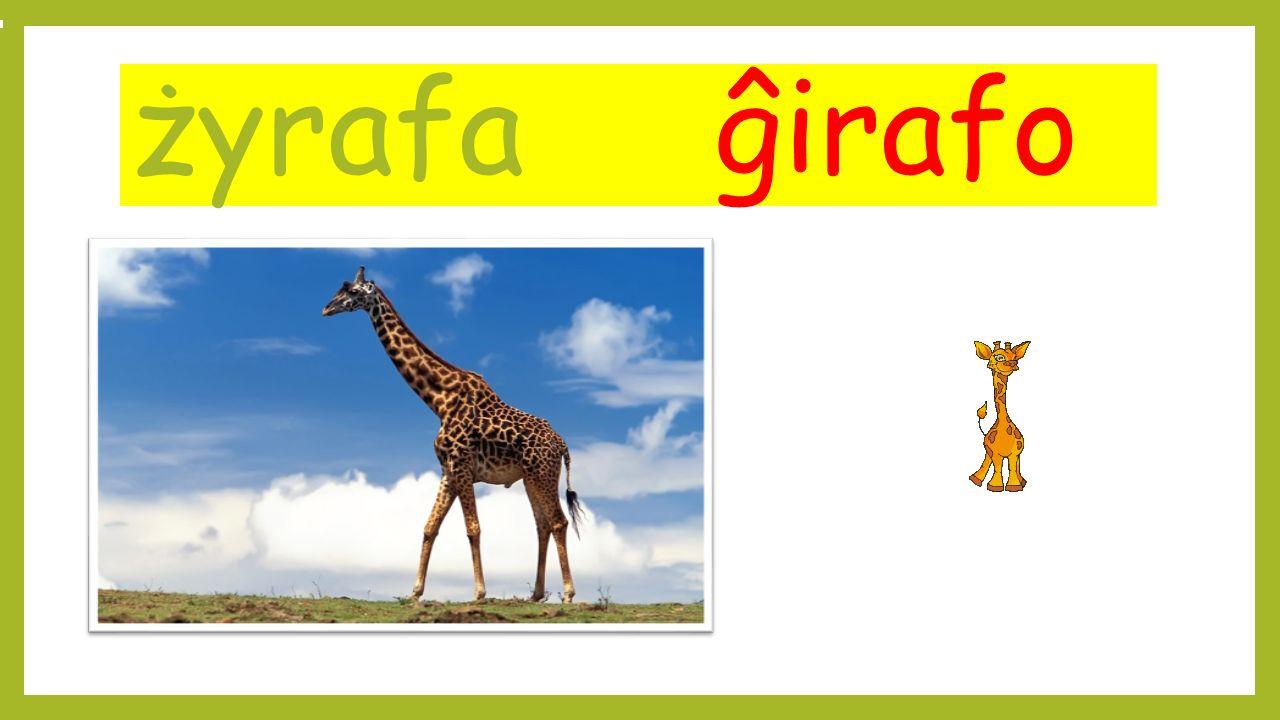 żyrafa ĝirafo