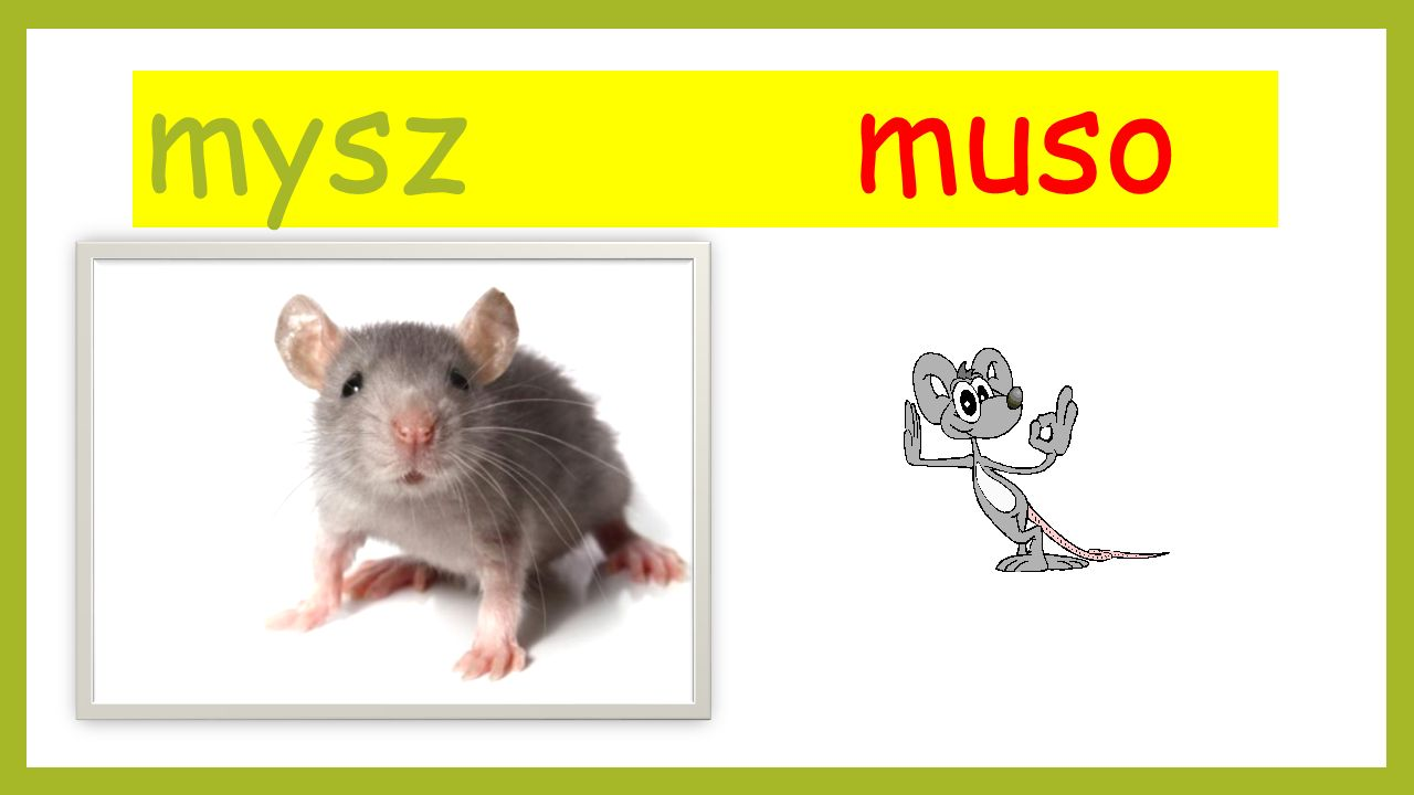 mysz muso