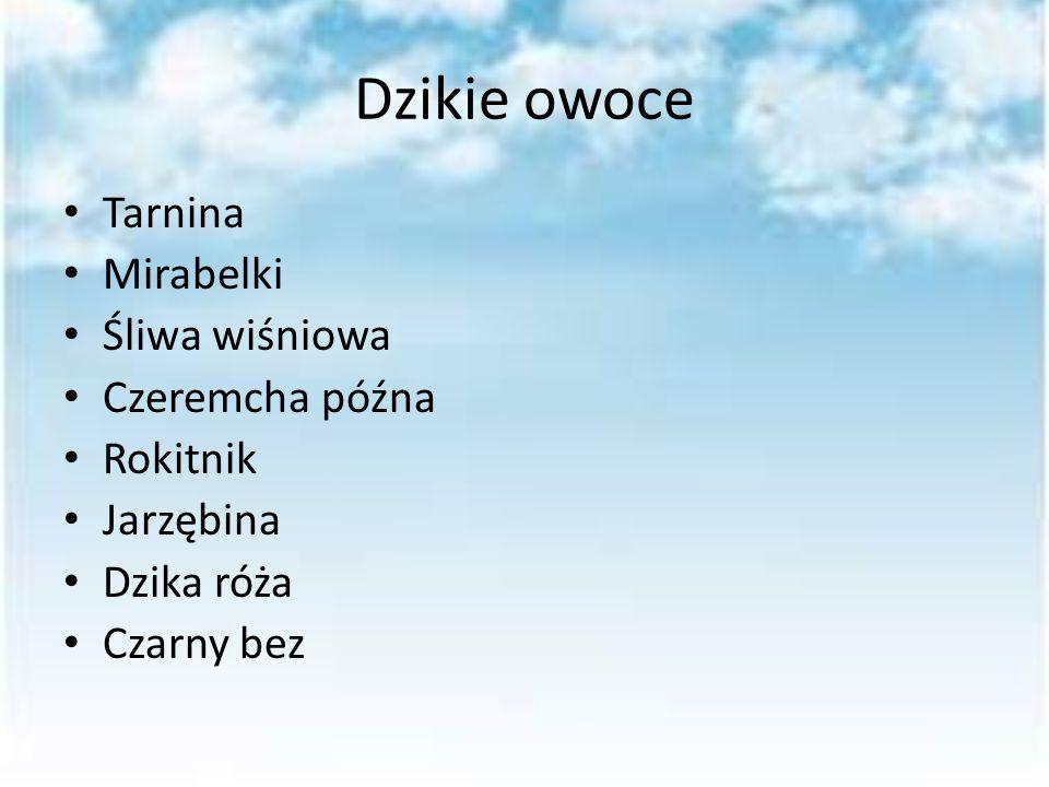 Dzikie owoce Tarnina Mirabelki Śliwa wiśniowa Czeremcha późna Rokitnik