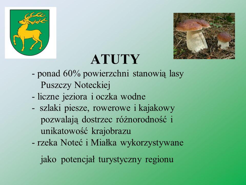 ATUTY - ponad 60% powierzchni stanowią lasy Puszczy Noteckiej
