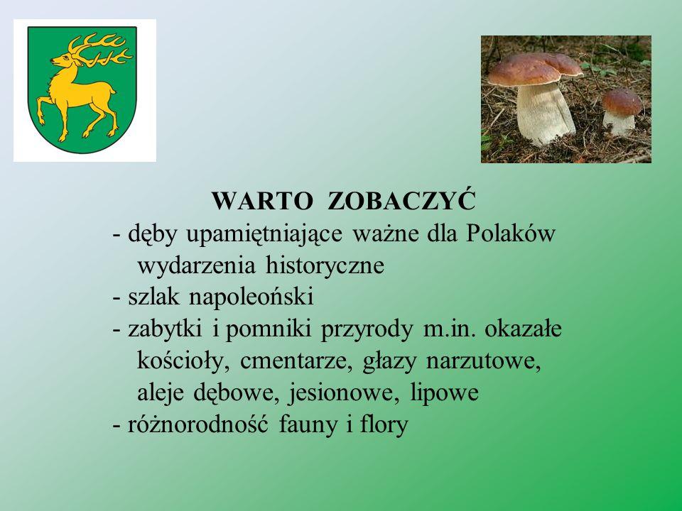 WARTO ZOBACZYĆ - dęby upamiętniające ważne dla Polaków wydarzenia historyczne. - szlak napoleoński.