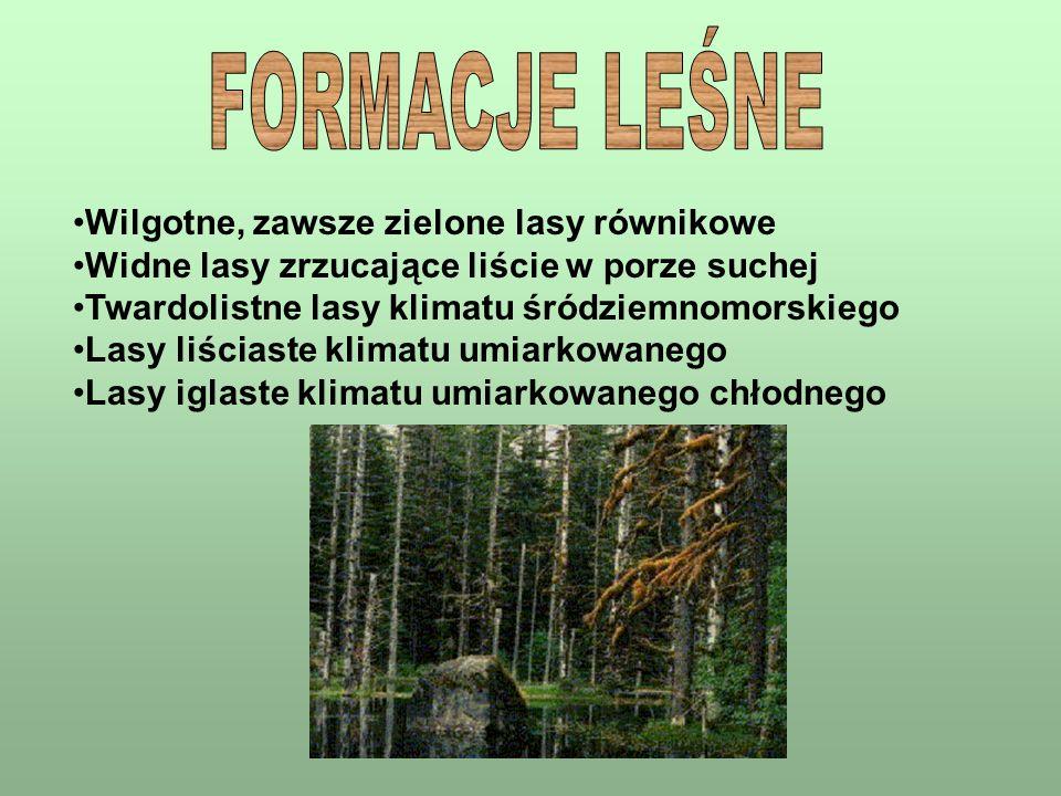 FORMACJE LEŚNE Wilgotne, zawsze zielone lasy równikowe