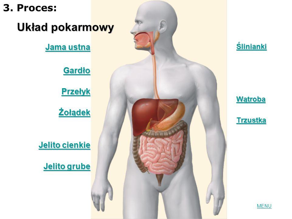 Układ pokarmowy 3. Proces: Jama ustna Gardło Przełyk Żołądek