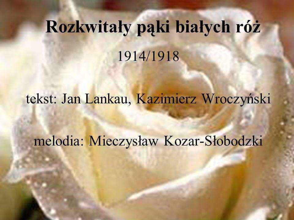 Rozkwitały pąki białych róż