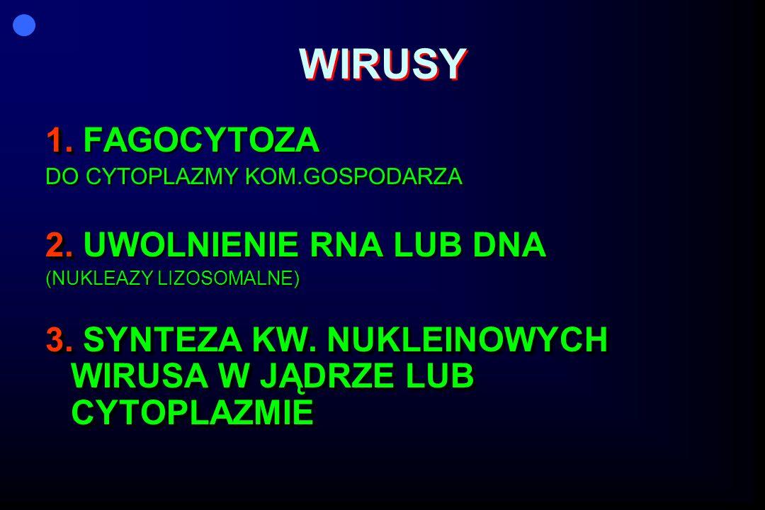 WIRUSY 1. FAGOCYTOZA 2. UWOLNIENIE RNA LUB DNA