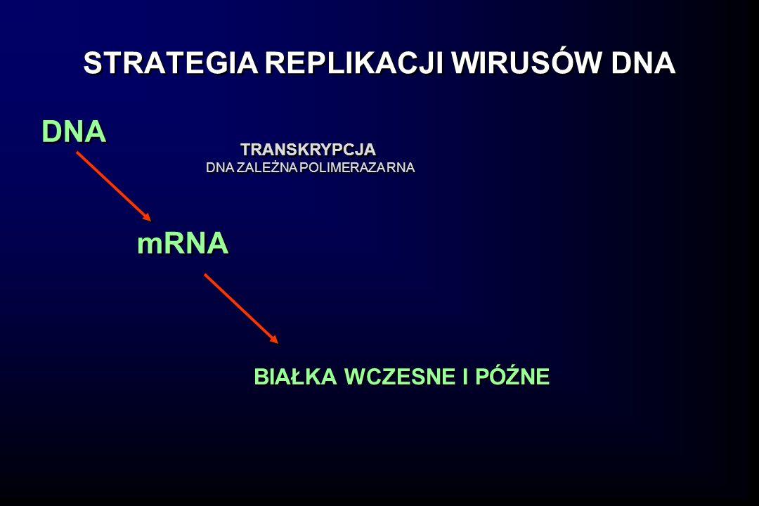 STRATEGIA REPLIKACJI WIRUSÓW DNA