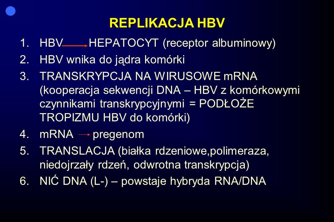 REPLIKACJA HBV HBV HEPATOCYT (receptor albuminowy)