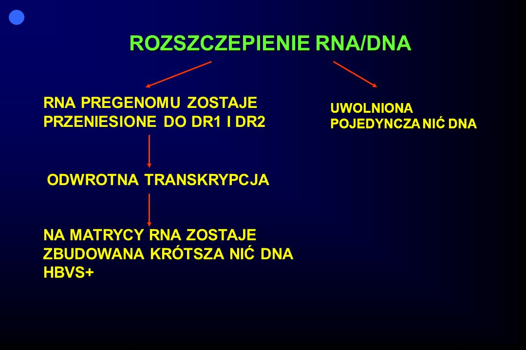ROZSZCZEPIENIE RNA/DNA