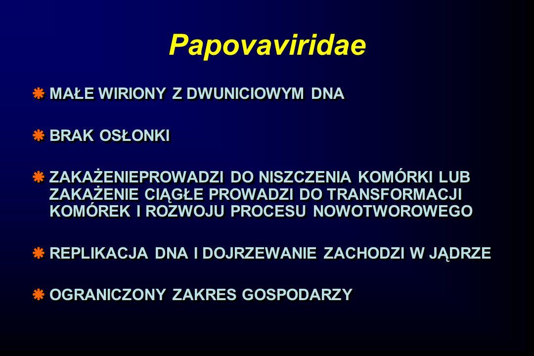 Papovaviridae MAŁE WIRIONY Z DWUNICIOWYM DNA BRAK OSŁONKI