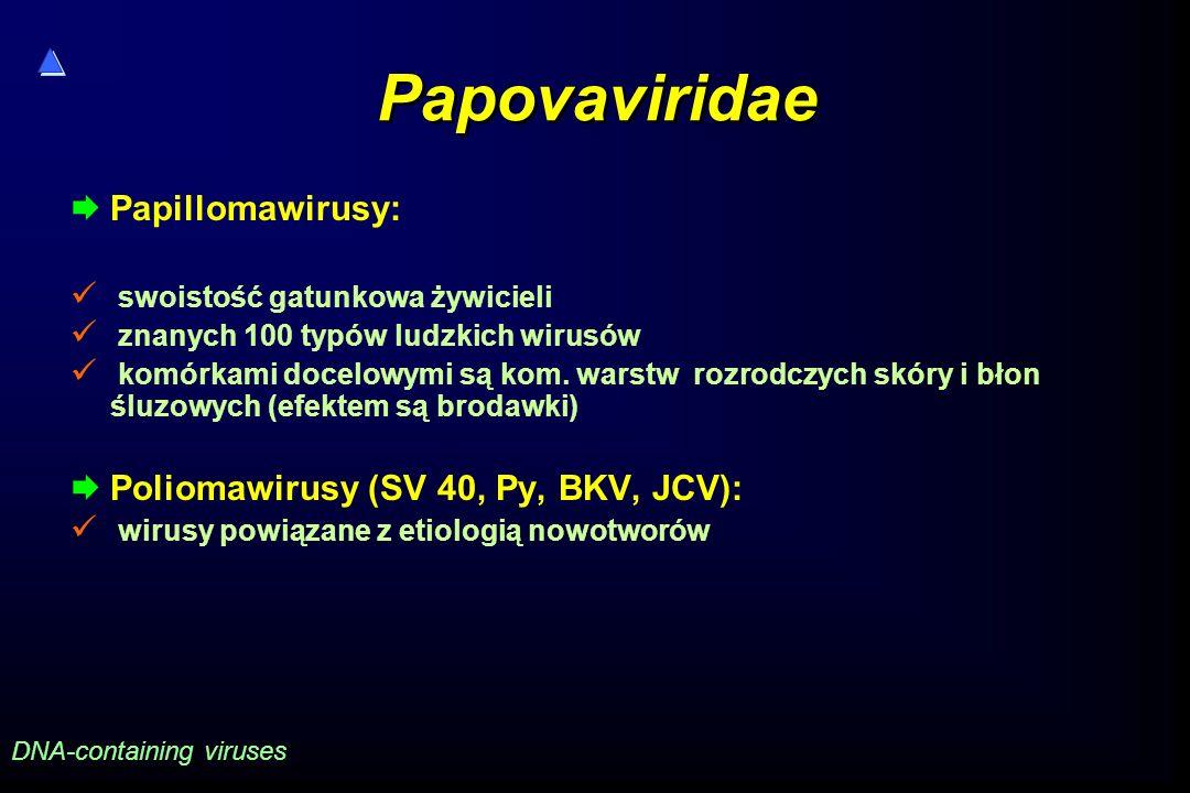 Papovaviridae Papillomawirusy: Poliomawirusy (SV 40, Py, BKV, JCV):