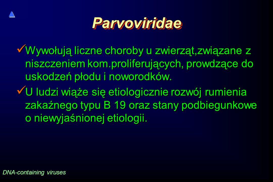 Parvoviridae Wywołują liczne choroby u zwierząt,związane z niszczeniem kom.proliferujących, prowdzące do uskodzeń płodu i noworodków.