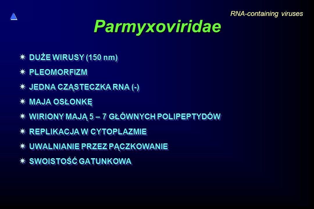 Parmyxoviridae DUŻE WIRUSY (150 nm) PLEOMORFIZM