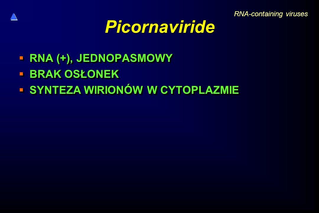 Picornaviride RNA (+), JEDNOPASMOWY BRAK OSŁONEK