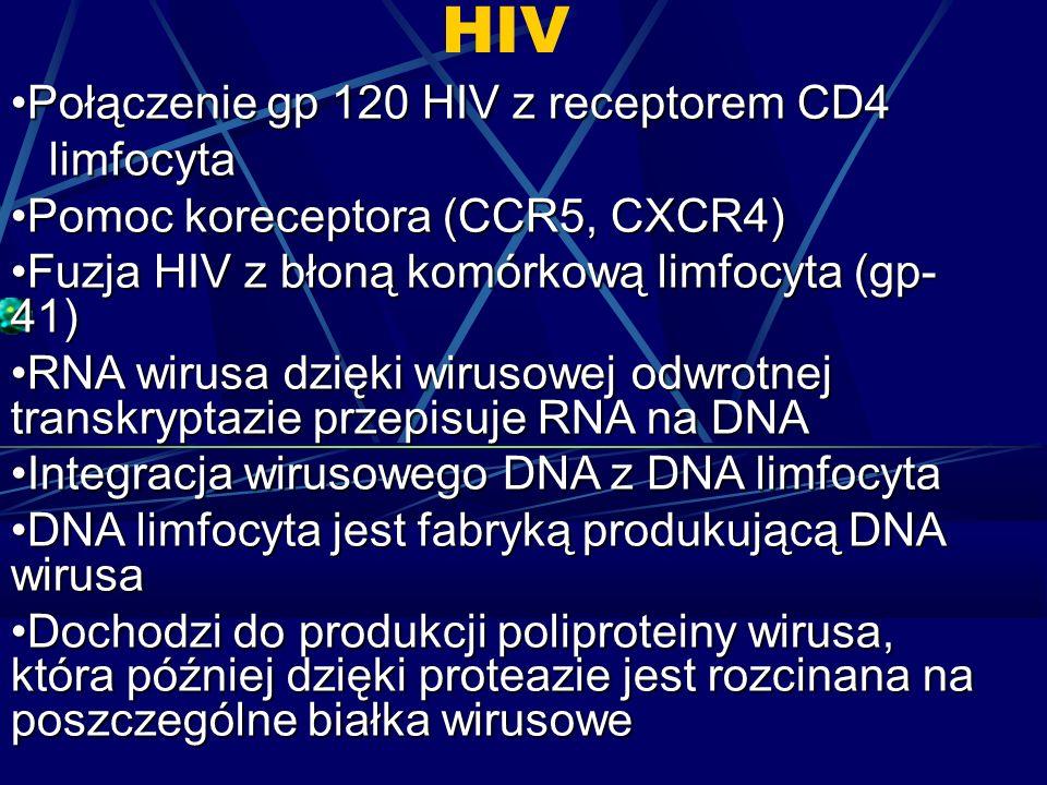 HIV Połączenie gp 120 HIV z receptorem CD4 limfocyta