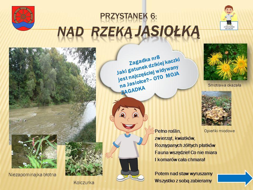 Przystanek 6: Nad rzeką Jasiołką