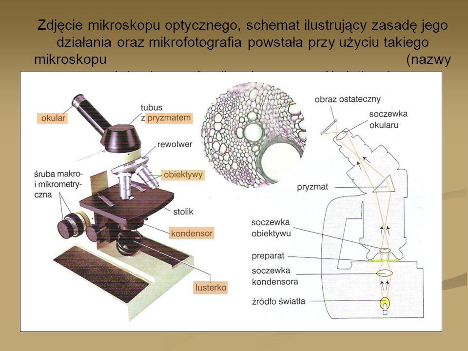Zdjęcie mikroskopu optycznego, schemat ilustrujący zasadę jego działania oraz mikrofotografia powstała przy użyciu takiego mikroskopu (nazwy części optycznych mikroskopu są podświetlone).