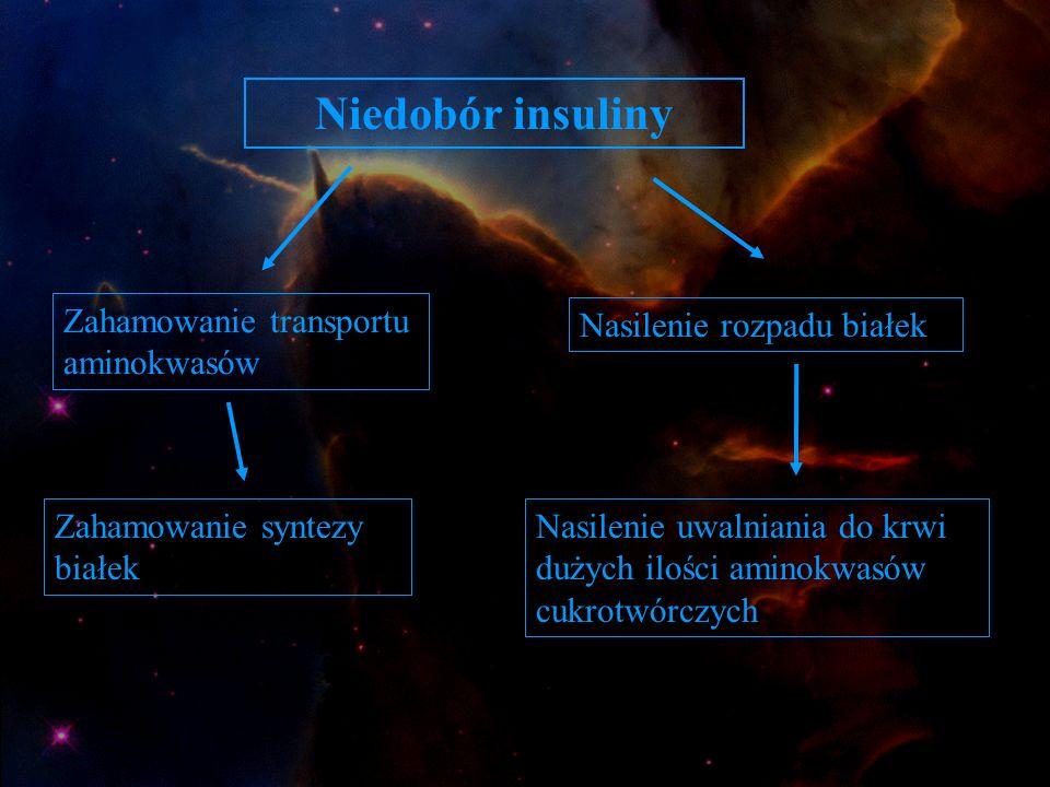 Niedobór insuliny Zahamowanie transportu aminokwasów