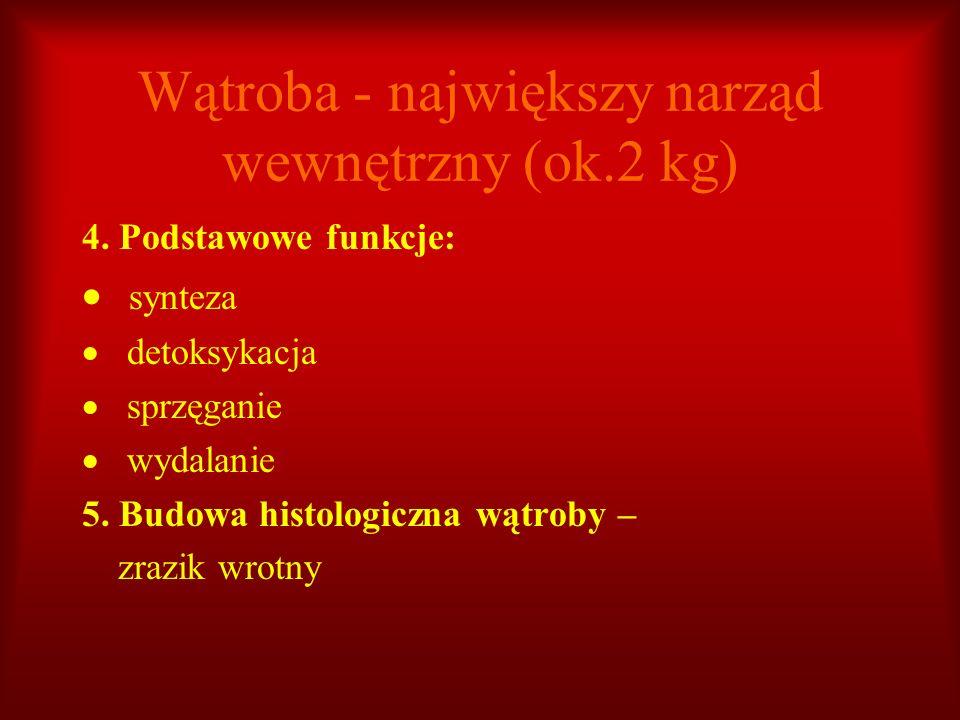 Wątroba - największy narząd wewnętrzny (ok.2 kg)