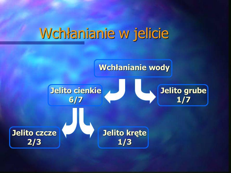 Wchłanianie w jelicie Jelito czcze 2/3 Jelito kręte 1/3 Jelito cienkie