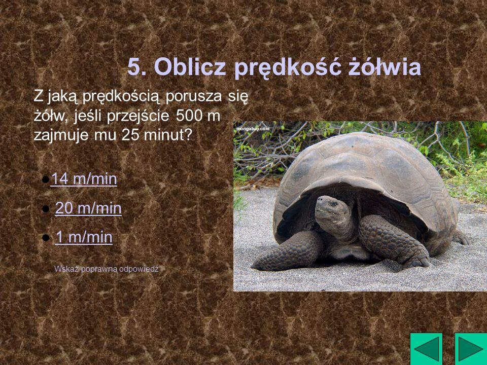 5. Oblicz prędkość żółwia