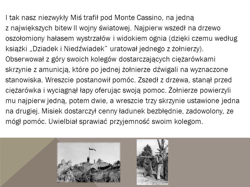 I tak nasz niezwykły Miś trafił pod Monte Cassino, na jedną z największych bitew II wojny światowej.