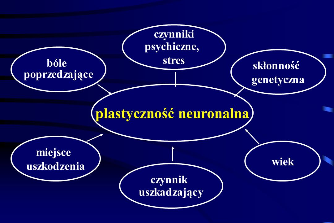 plastyczność neuronalna