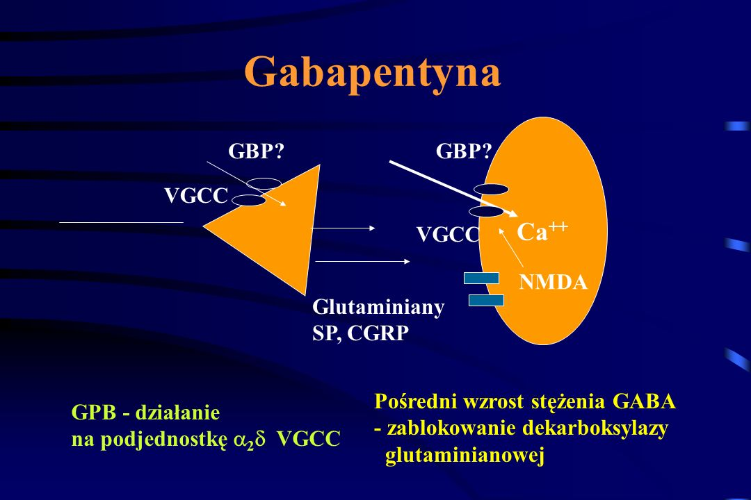 Gabapentyna Ca++ GBP GBP VGCC VGCC NMDA Glutaminiany SP, CGRP