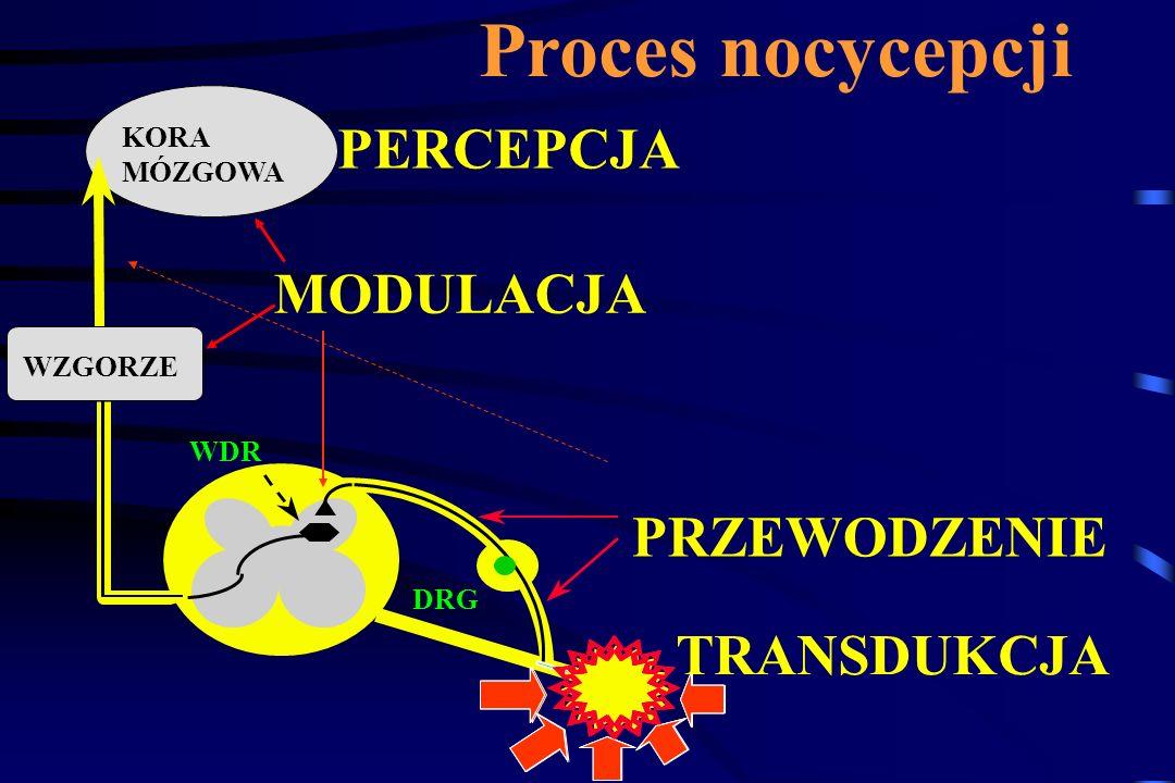 Proces nocycepcji PERCEPCJA MODULACJA PRZEWODZENIE TRANSDUKCJA KORA