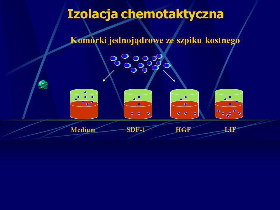 Izolacja chemotaktyczna Komórki jednojądrowe ze szpiku kostnego