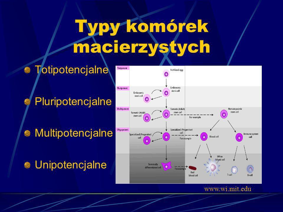 Typy komórek macierzystych